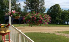 Des fleurs en jardinière